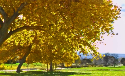 golden-cottonwood